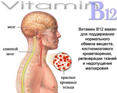 vitamin-b12-benefits