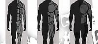 Типы телосложения. Соматотип