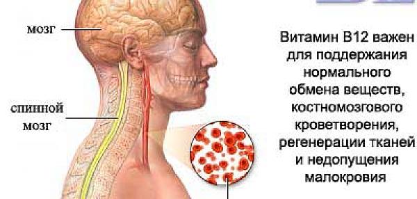 Витамин В12 и Фолиевая Кислота